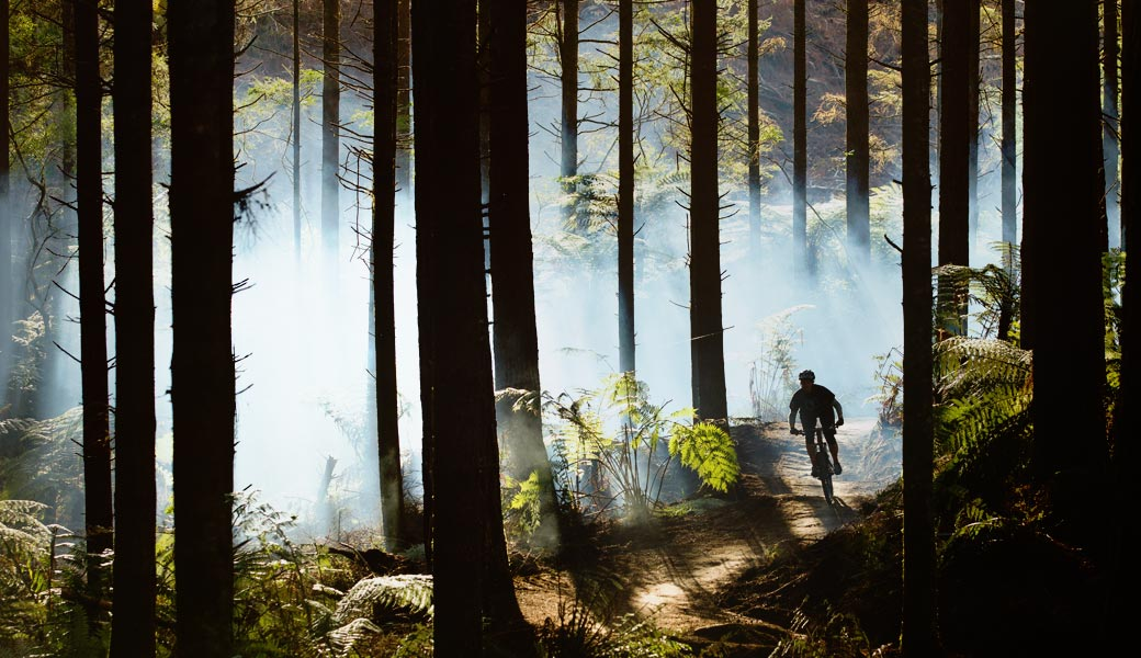RIDING THROUGH FOREST ON MOUNTAIN BIKE